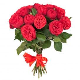 Кустовая роза Пиано Фриленд