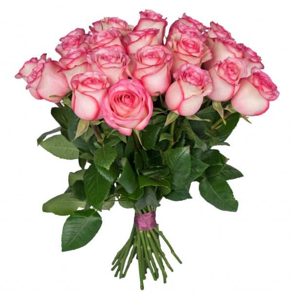 Роза Карусель - 40 см.