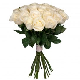 Роза Мондиаль - 70 см
