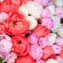 Букет цветов из 101 пиона микс (Премиум)