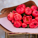 Букет цветов из 11 коралловых пионов в упаковке (Премиум)