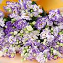 Букет цветов из 25 бело-фиолетовых эустом в упаковке