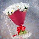 Букет цветов из 35 белых кустовых хризантем в упаковке
