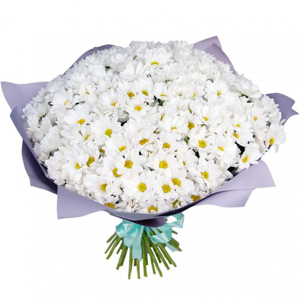 Букет цветов из 51 белой кустовой хризантемы в упаковке