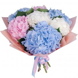 Букет цветов из 7 гортензий микс в упаковке