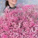 Букет цветов из розовой гипсофилы