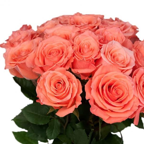 Роза цветная -80 см