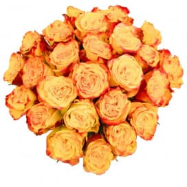 25 красно-желтых роз 50 см (Эквадор)