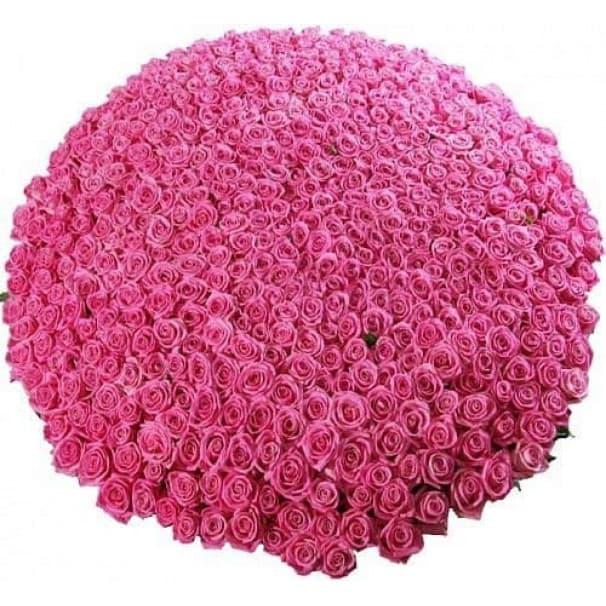 Элитный букет №44 из 501 розы