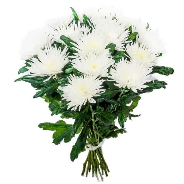Хризантема стандартная